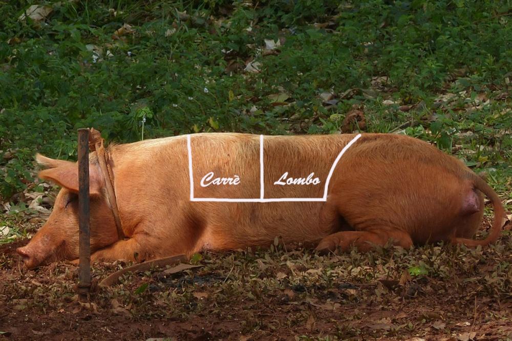Arista di maiale per blog